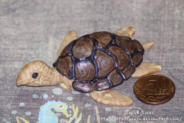 Turtle (Img 4965 1)