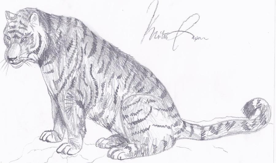 Tigre Sketch: Tiger Sketch By Tohee On DeviantArt