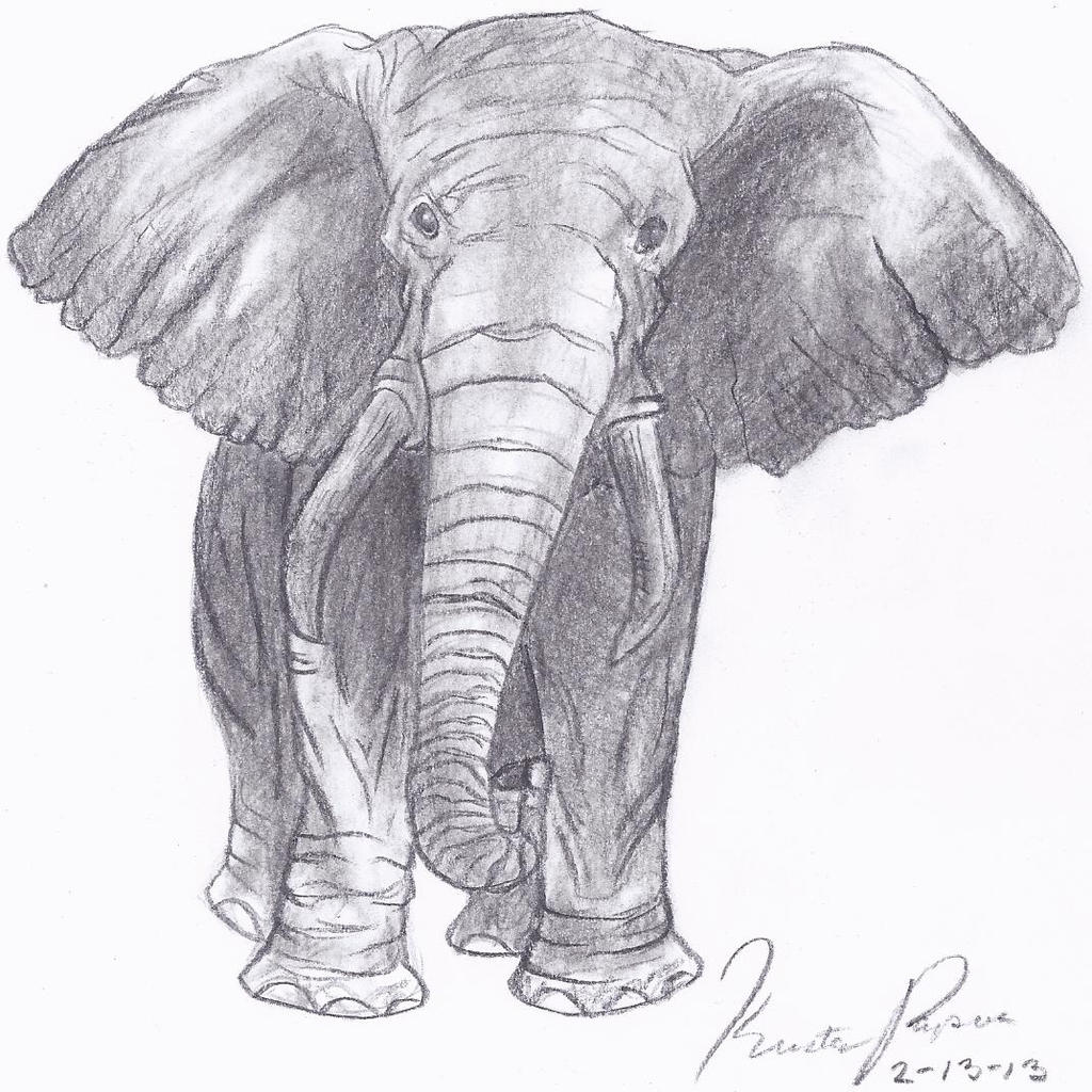 Pencil Drawings Of Elephants Tumblr Elephant Sketch by Toh...