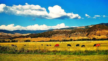 Pasturess