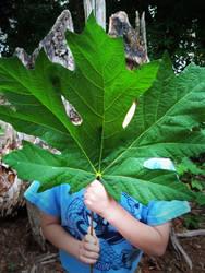 Big Leaf, Small Child.