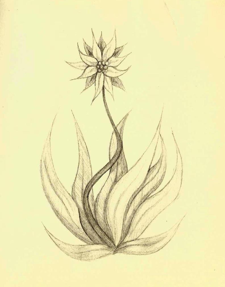 Flower by kastubbins