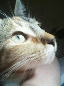 kastubbins's Profile Picture