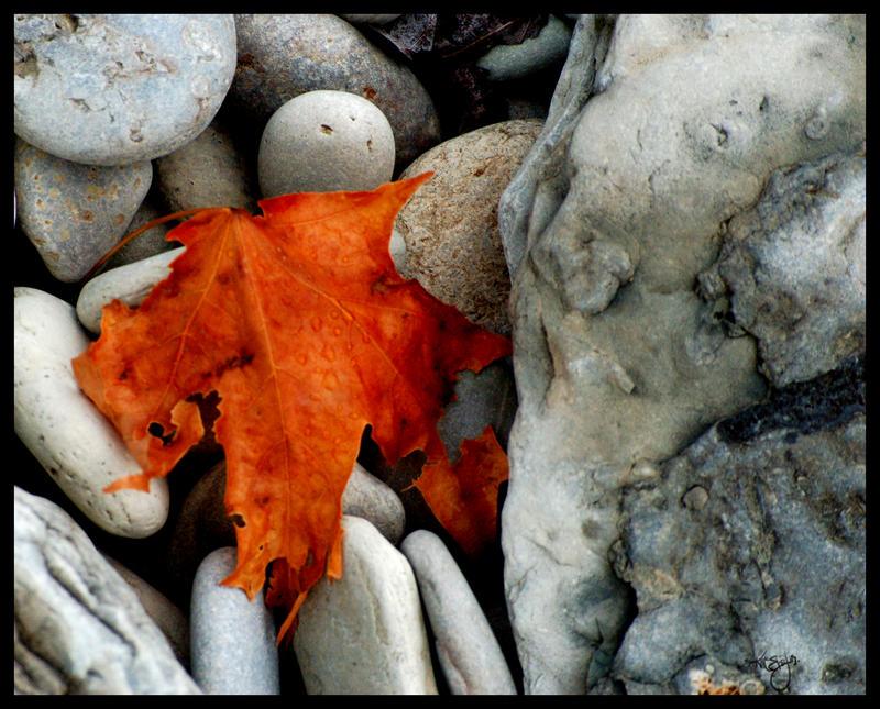 A Splash of Colour by Ciuin