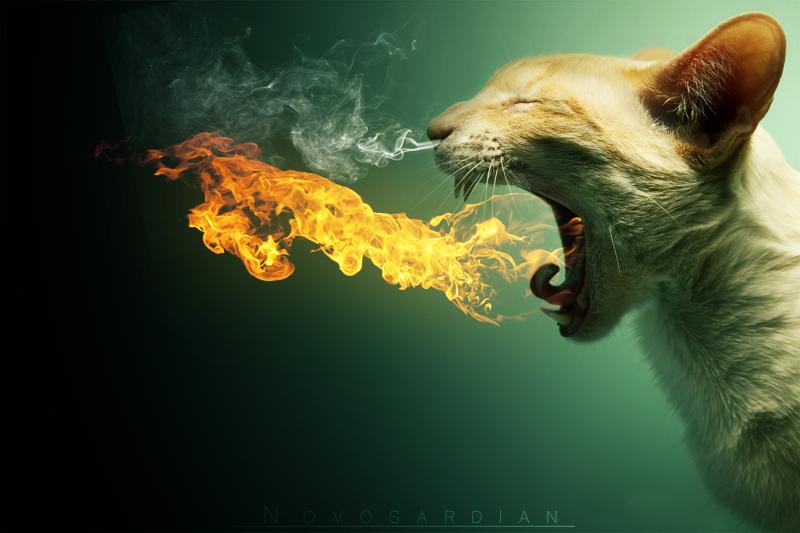 Cat art | wallpaper by ForbiddenDubstep on DeviantArt
