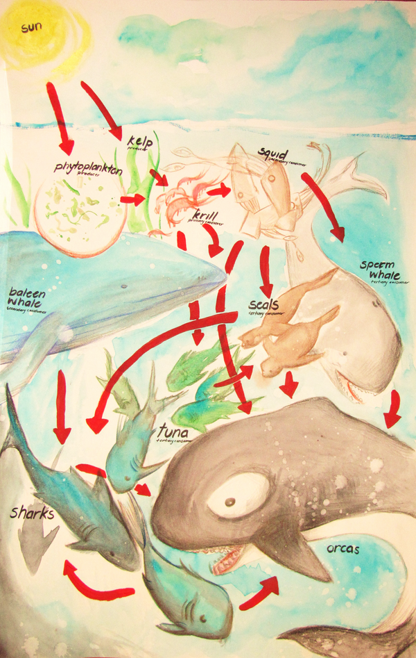 Pelagic food web by murderaddict