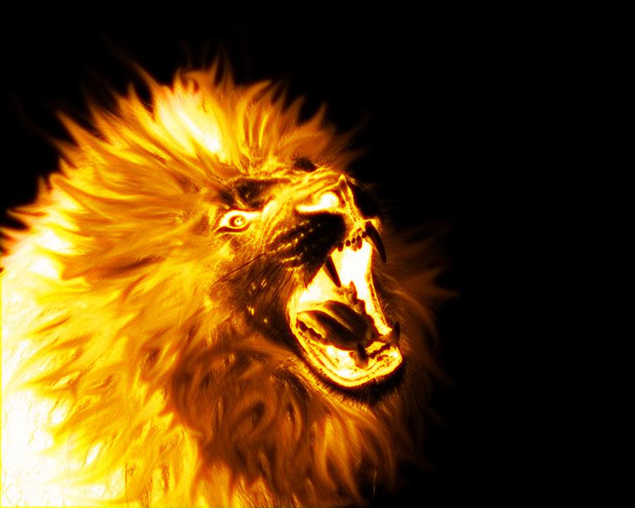 Fire Lion Wallpaper