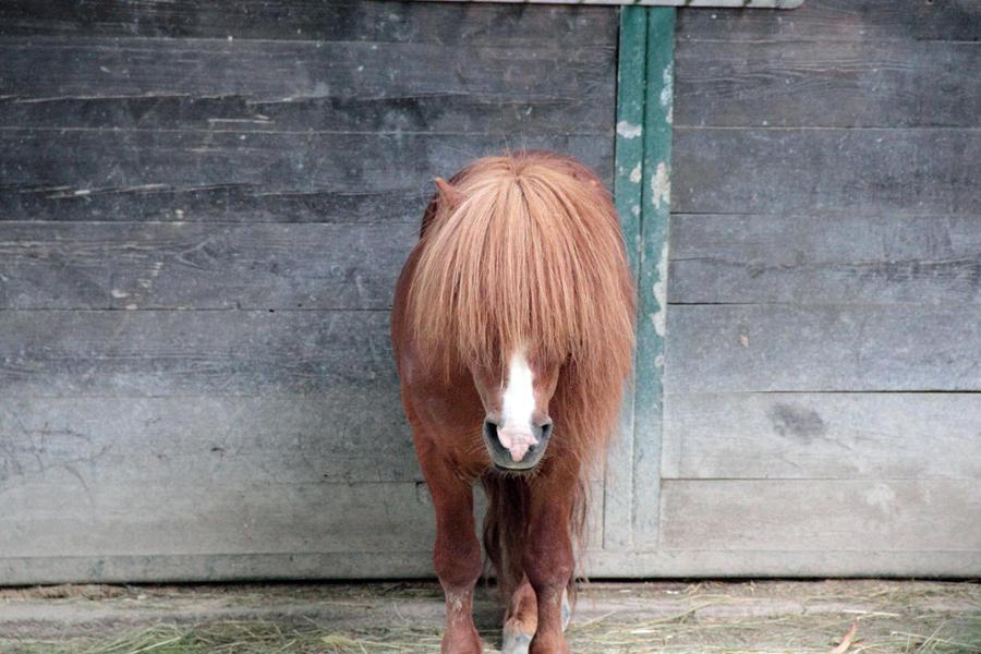 Rasta pony by cluster5020