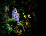 owl by GreatExposure