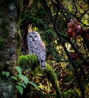 Color owl...