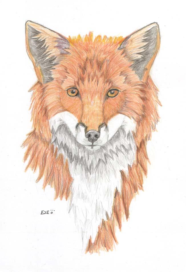 TRB: Red Fox
