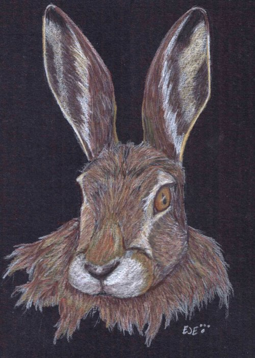 TRB: Mountain Hare