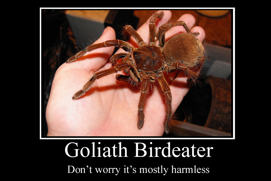 goliath_birdeater_motivator_by_party9999