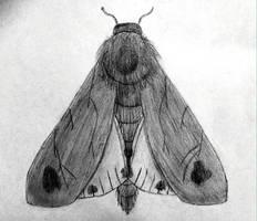 Symmetry study by GrassoGatto