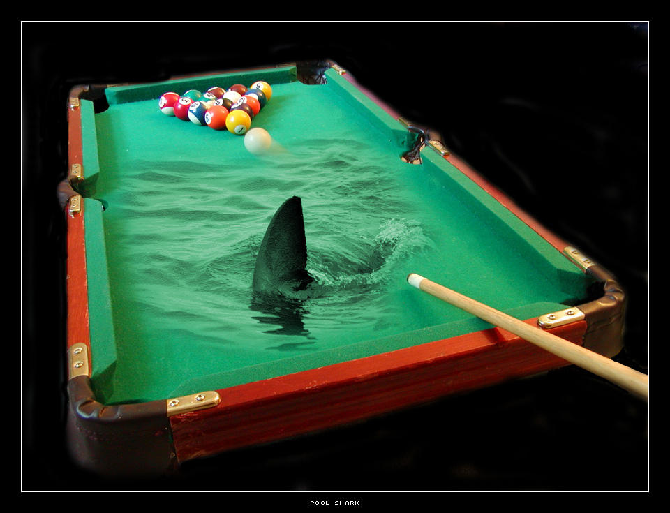 Pool shark by Pixelcoma