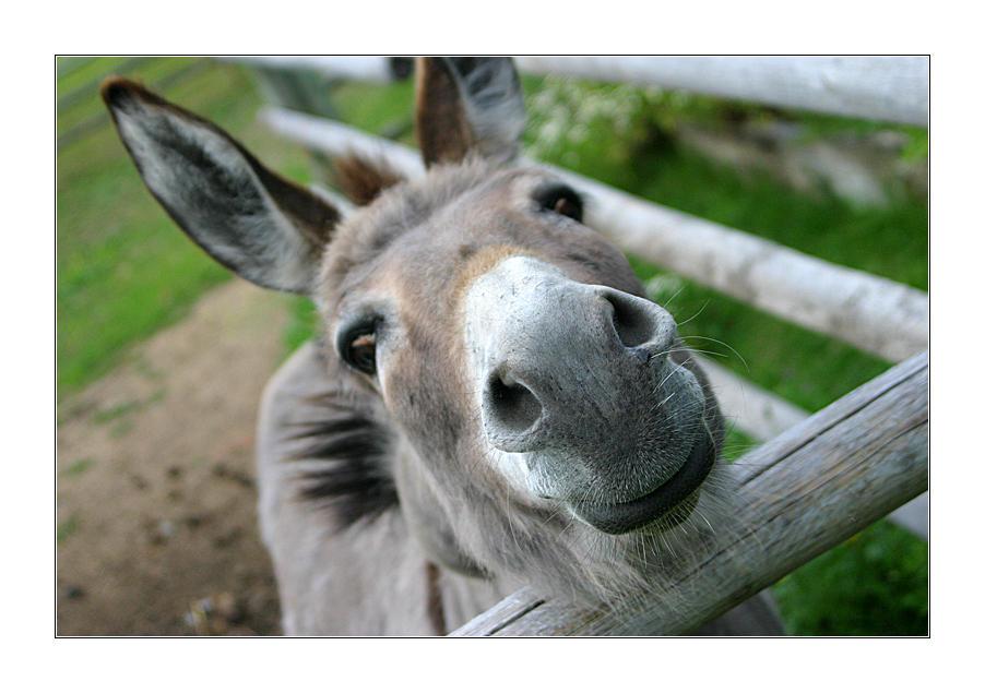 Donkey by spliffy