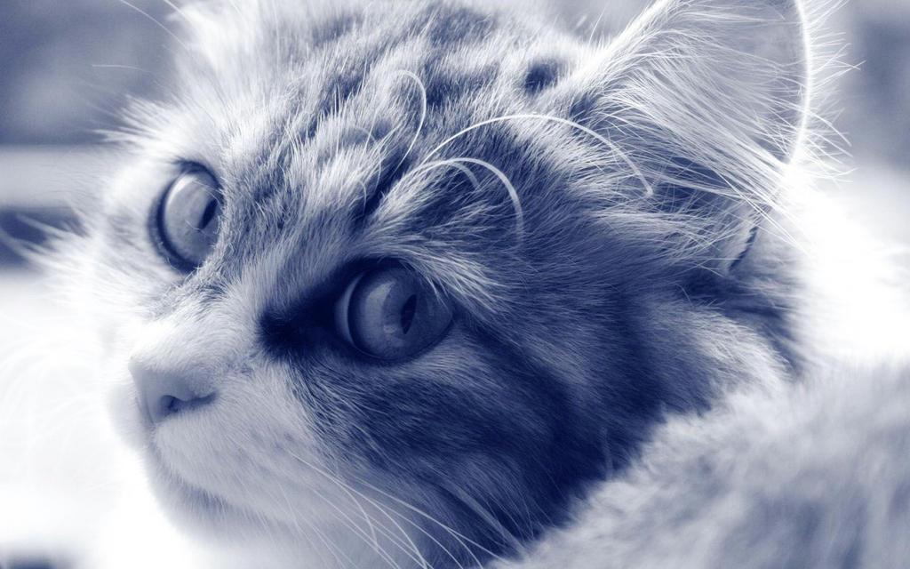 Wallpaper - Kitty by Omikronek