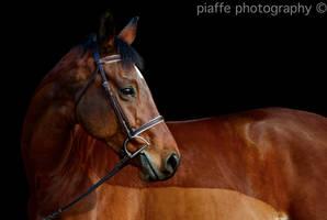 Kieran of December. by EquusPhoto