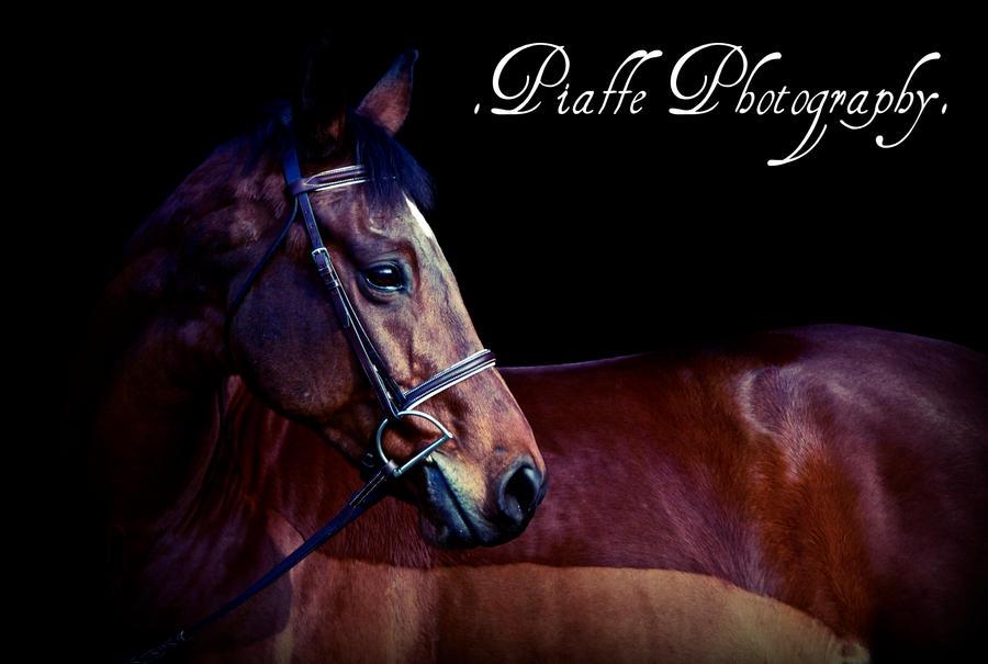 EquusPhoto's Profile Picture