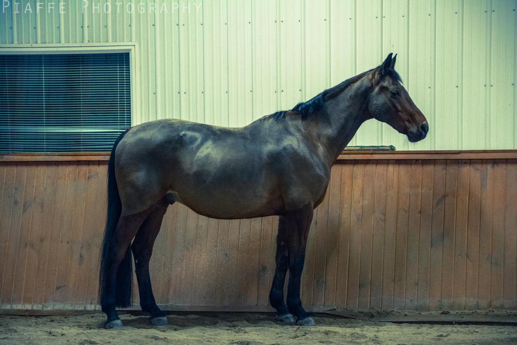 Kieran in Winter 2014 v.1 by EquusPhoto