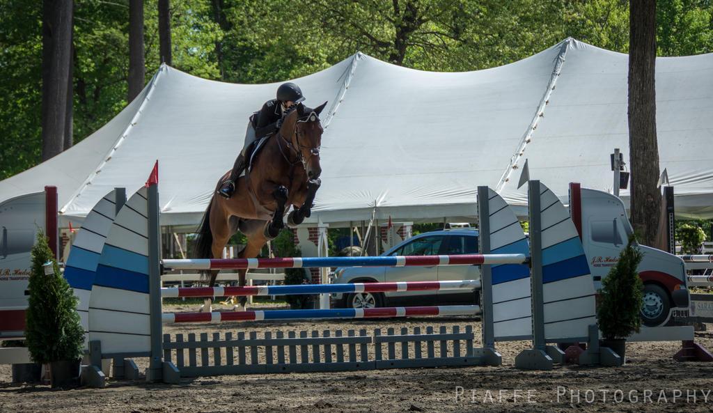 Saratoga Horse Show 21 by EquusPhoto