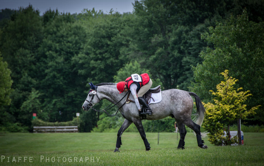 HPNJ Intermediate 6 by EquusPhoto