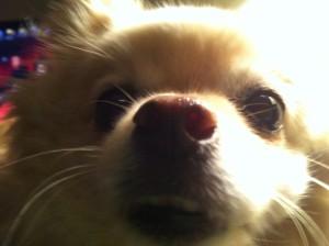 Quendrega's Profile Picture