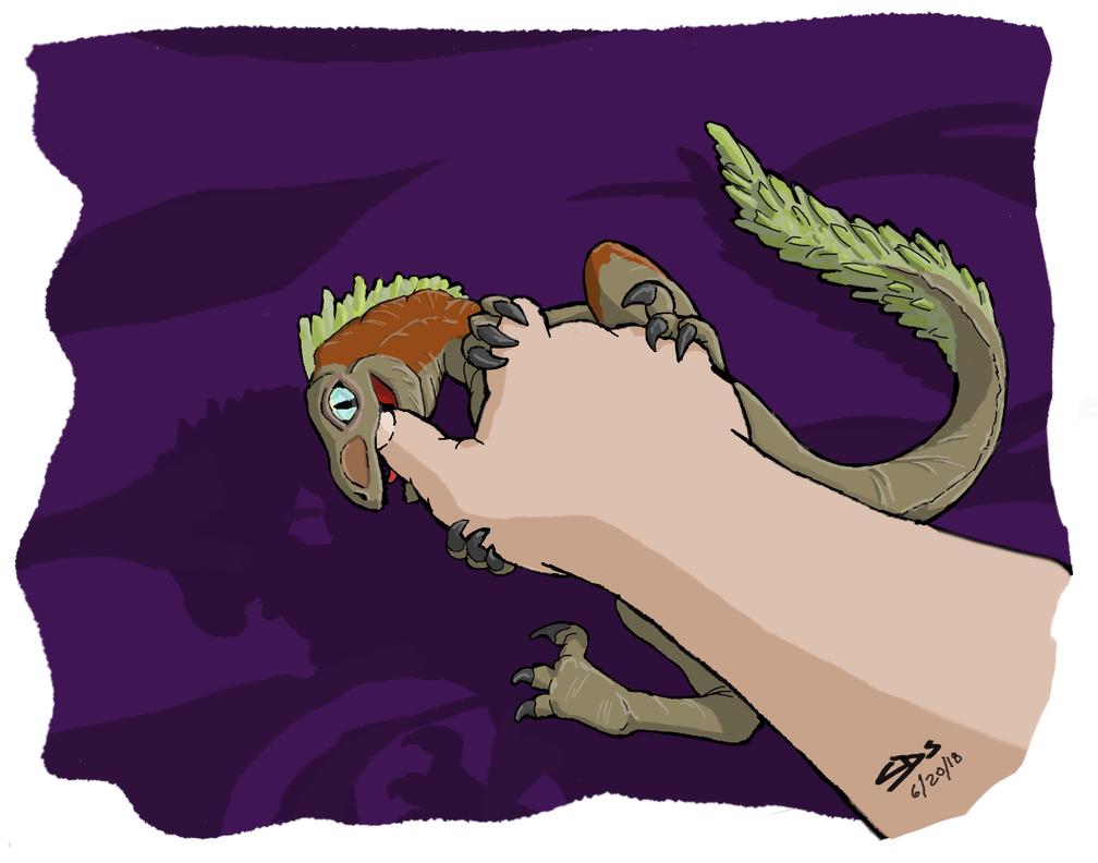Baby Raptor by Sches