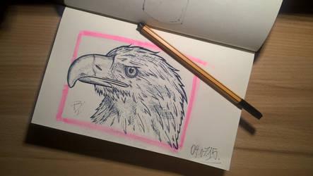 Eagle by basgroll