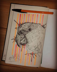 parrot sketch (2018) by basgroll