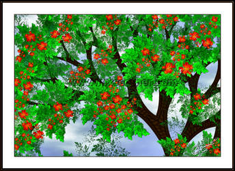 Flamboyant Tree by LaxmiJayaraj