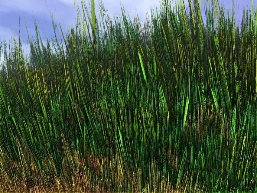 Grassland... by LaxmiJayaraj