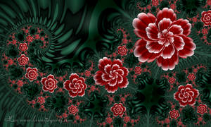 Flowers again... by LaxmiJayaraj