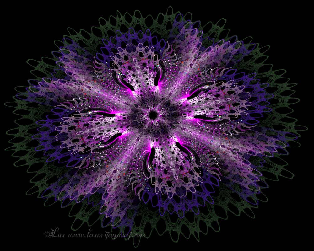 JWild Flower by LaxmiJayaraj