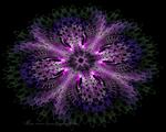 JWild Flower