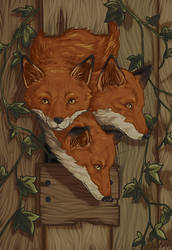 Foxes Photostudy