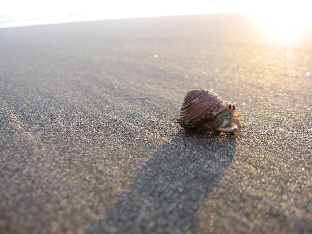 Hermit crab by NaturalBornCamper