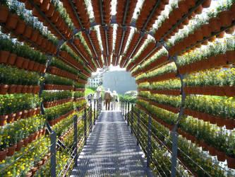 Tunnel Of Flowers by Grumzz