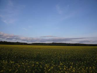 A field of Rape by Grumzz