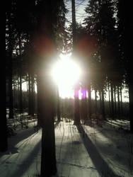 Sun+Snow+Trees by Grumzz
