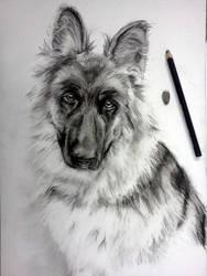 Dog by caratulion