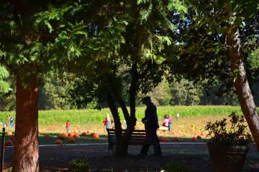 Pumpkin Watching by BeverlyMichelle