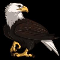Eagle by Innali