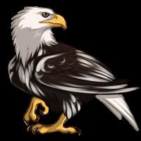 Piebald Eagle by Innali