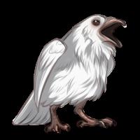 Albino Raven by Innali