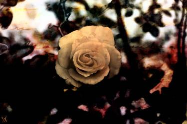 Gothic Rose by crinklestein