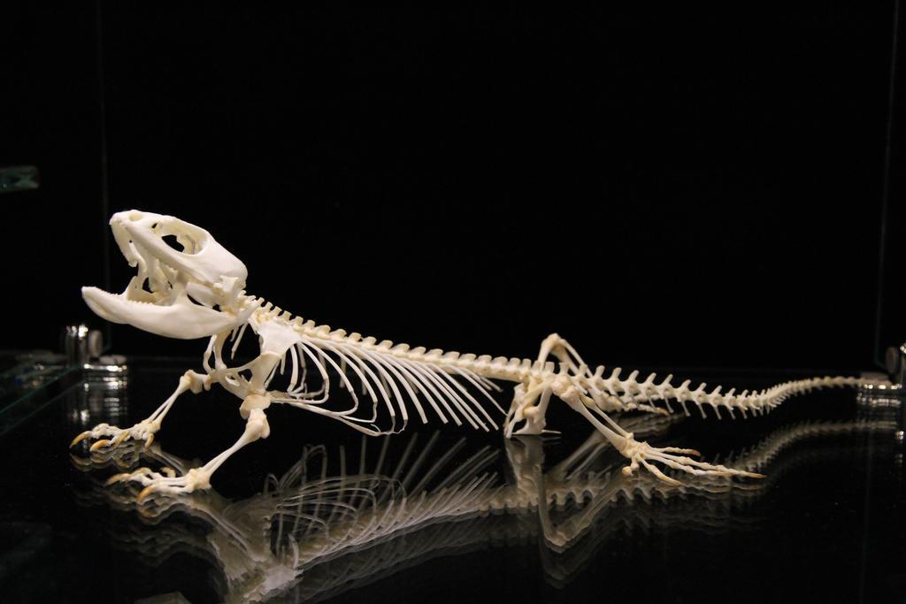 Bearded Lizard by stablefly