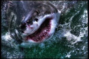 The Great White HDR by Riot23