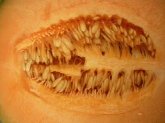 Cantaloup-3