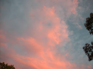 Cotton Candy Clouds 1285